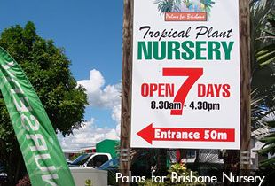 'Palms for Brisbane' Nursery