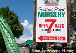 'Palms for Brisbane' Nursery