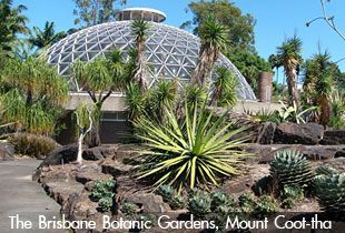 The Brisbane Botanic Gardens, Mount Coot-tha