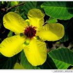 ดอกไม้ประจำชาติ กลุ่มประเทศ ASEAN