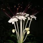 พัดโบก … ดอกไม้แห่งเสียงเพลง
