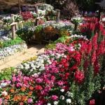 สวนแม่ฟ้าหลวง ดอยตุง Doi Tung